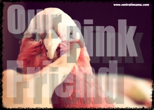 Our Pink Friend_Fotor